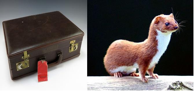 weasels, weasels, weasels, measles