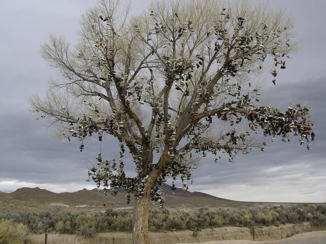 Tree Shoes Nevada Nevada Shoe Tree