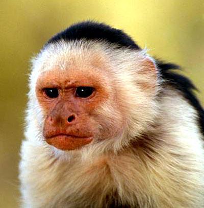 Monkey Pictures Monkey