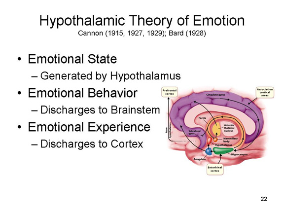 hypothalamic theory of emotion 5 Hypothalamic theory of emotion 5 theories of emotion the james-lange theory american psychologist william james and the danish psychologist carl lange james-lange theory holds that physiological response give rise to our cognitive experience of emotion.