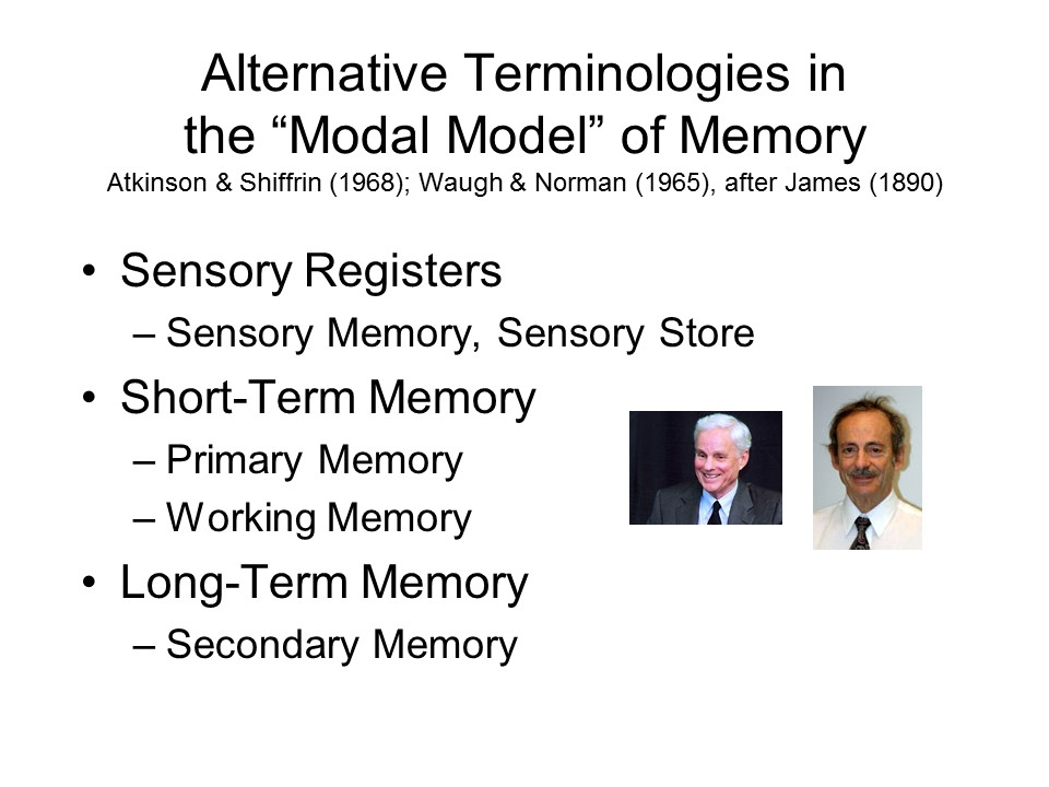 multi store model of memory evaluation