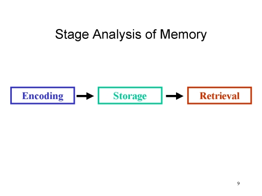 an analysis of the three stages of memory Caffeine impact on working memory-related network activation patterns in  glm analysis for the three  on working memory during the earliest stages of.