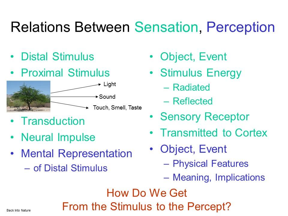 define sensation in psychology