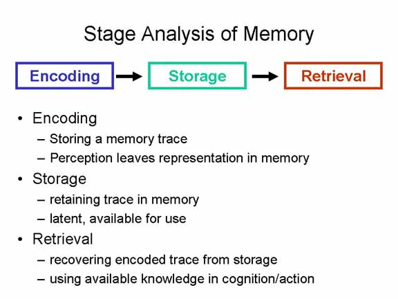 trace steps to long term memory Encoding is the crucial first step to creating a new memory  the process begins  with the creation of a memory trace or engram in response to the external stimuli   it is believed that, in general, encoding for short-term memory storage in the.