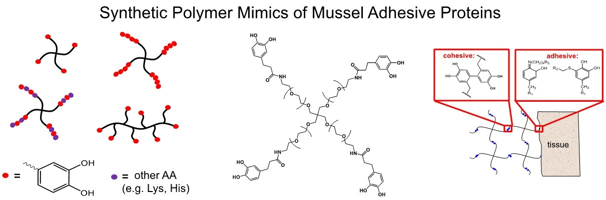3 Synthetic Polymer mimics of mussel adhesive proteins