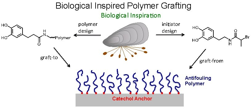 5 biological inspired polymer grafting