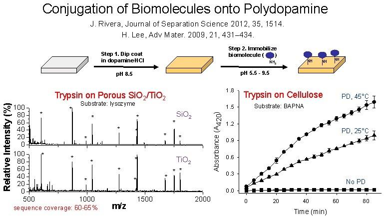 8 conjugation of biomolecules onto polydopamine