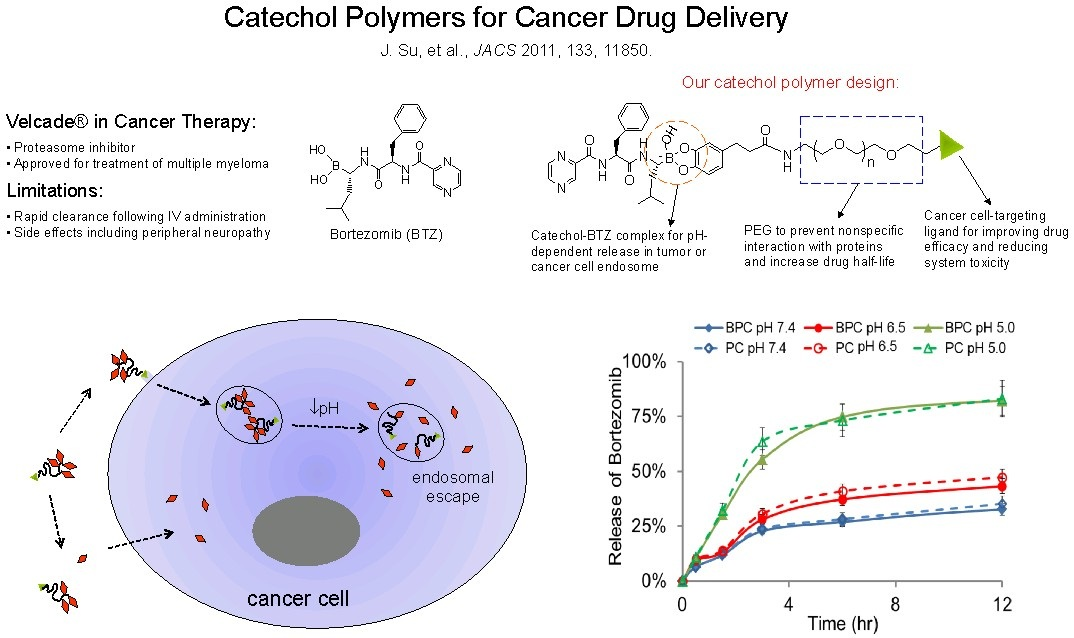 17 catechol polymers for cancer drug delivery
