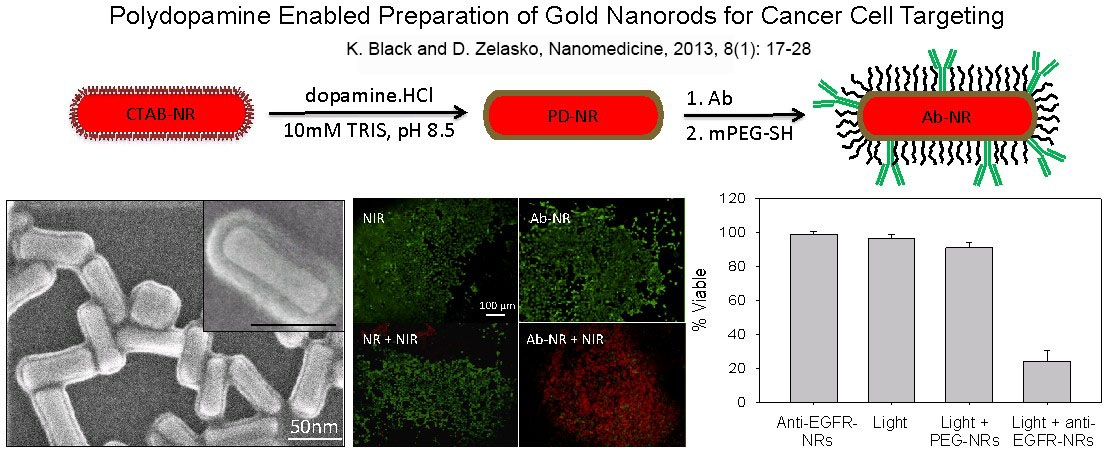 18 polydopamine enabled preparation of gold nanorods for cancer cell targeting
