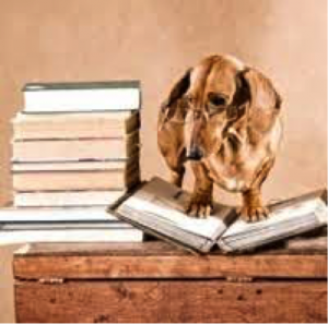 Charming miniature dachshund  wearing wire-rim glasses stands atop one book beside a pile of books equal to its height