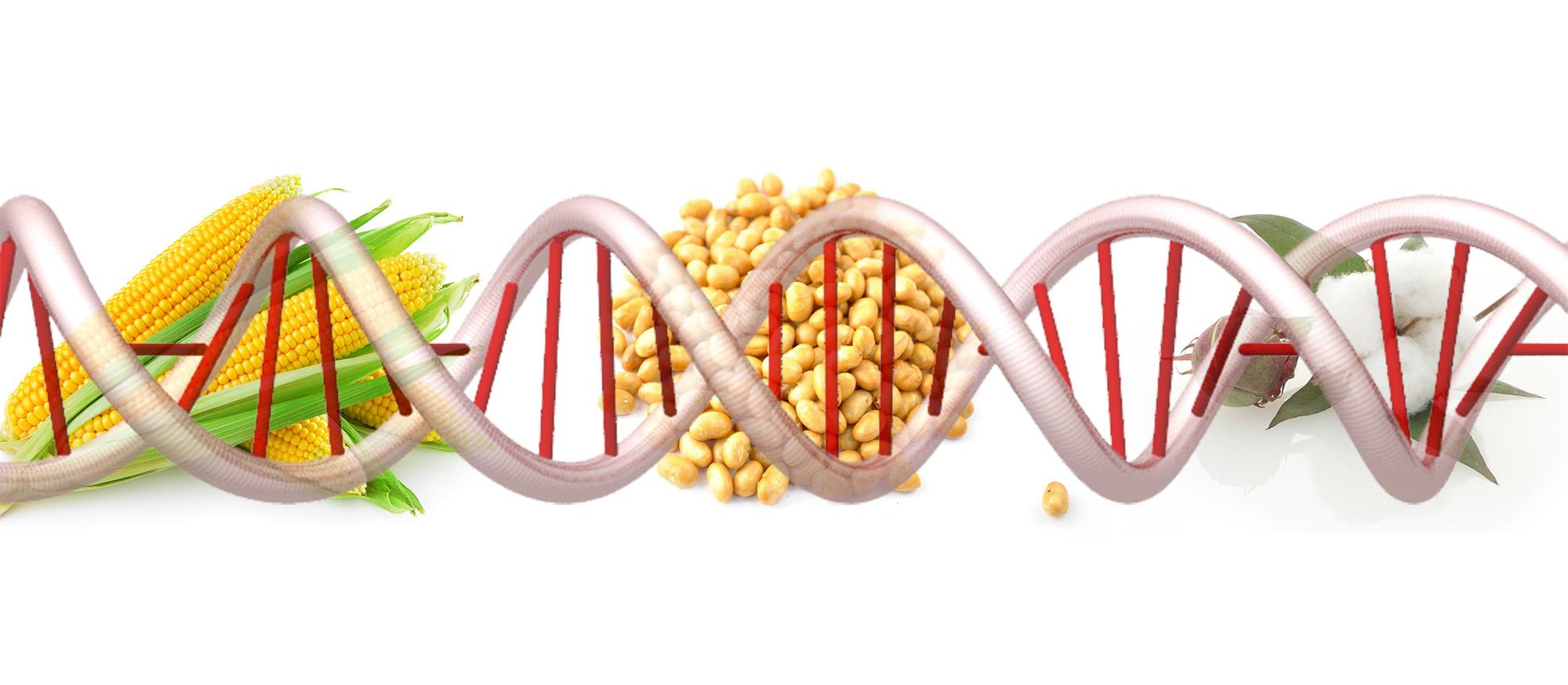 GMO or No?