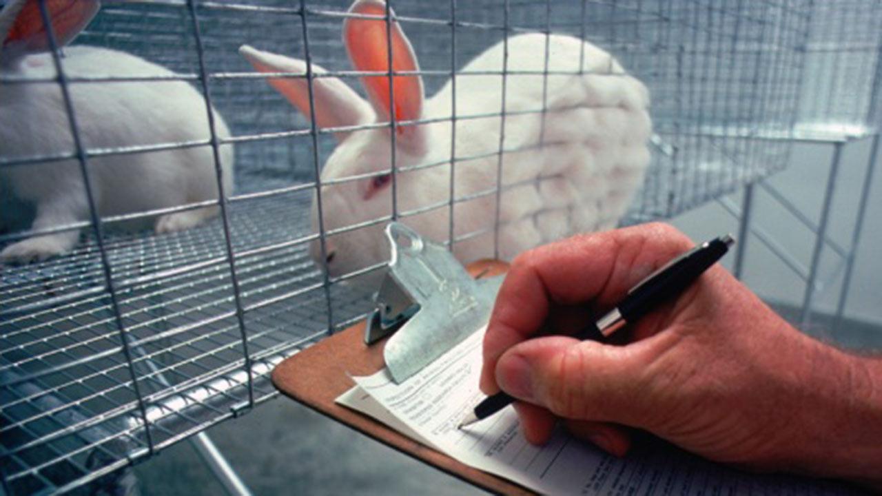 The Debate on Animal Experimentation