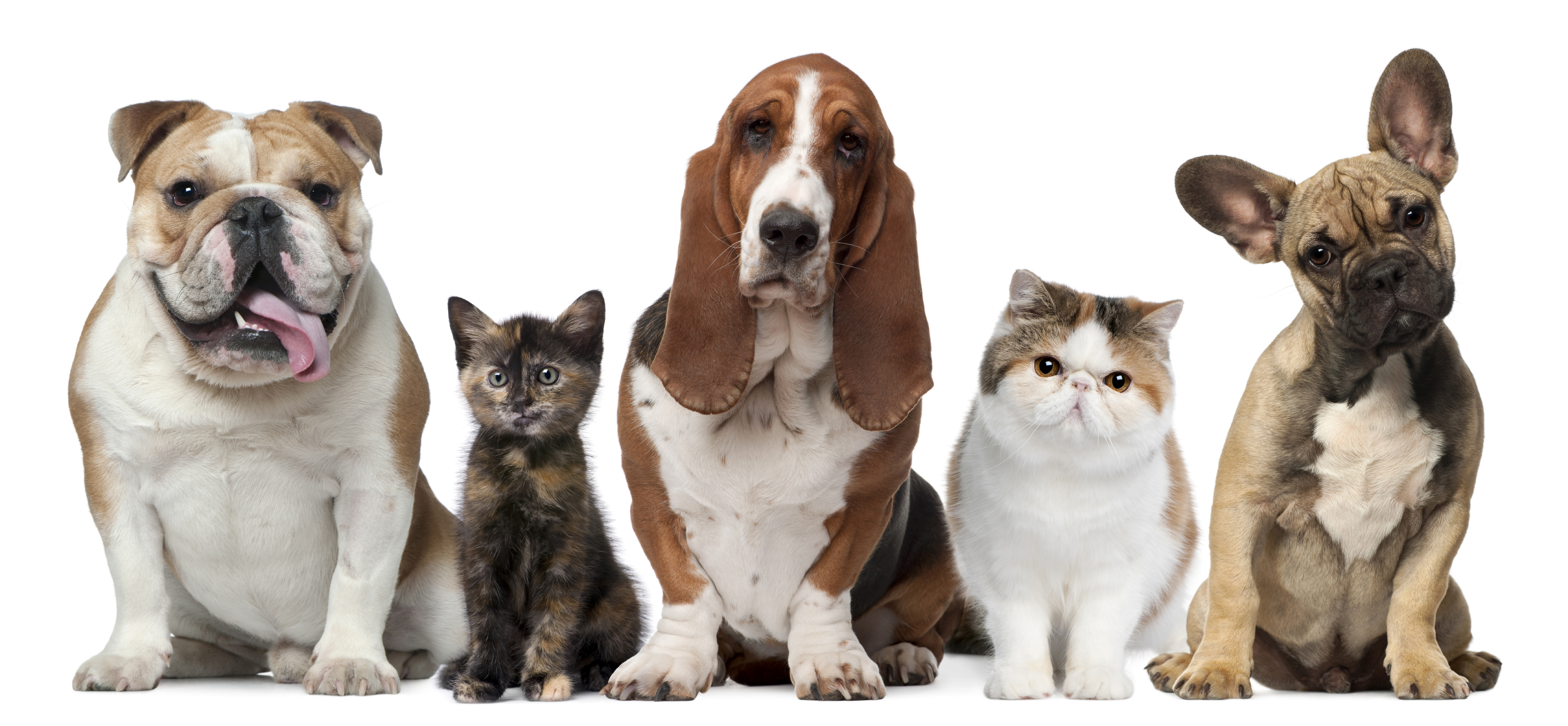 Our Furry Friends and Us