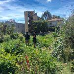 Week 2 garden