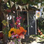 cropped-week-4-flowers.jpg
